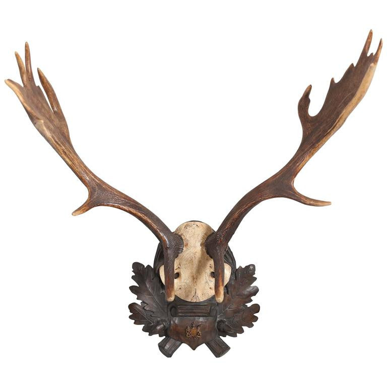 19th Century German Fallow Deer Trophy with Original Württemberg Badge