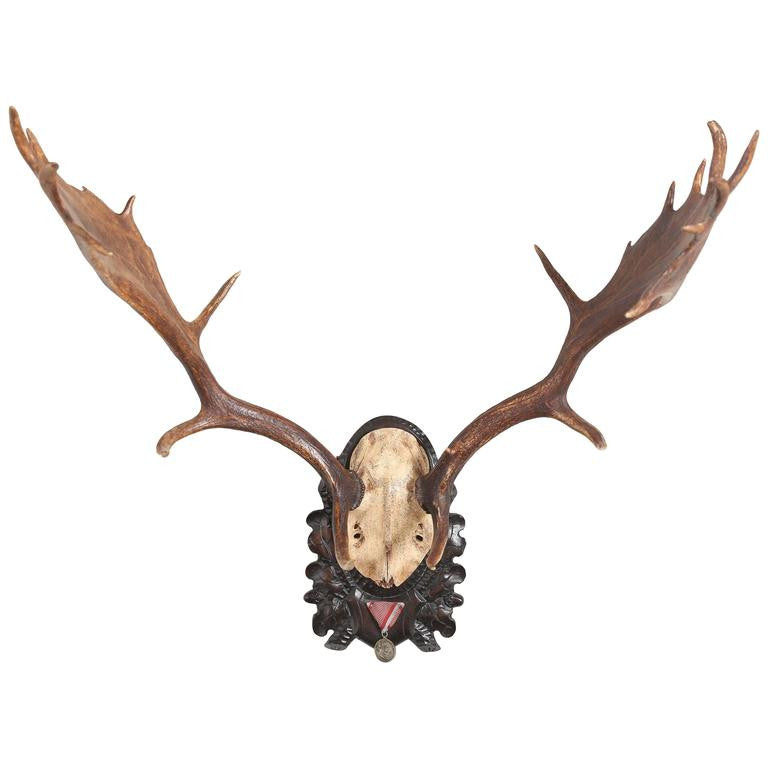 19th Century Habsburg Fallow Deer Trophy on Black Forest with Veteran's Medal