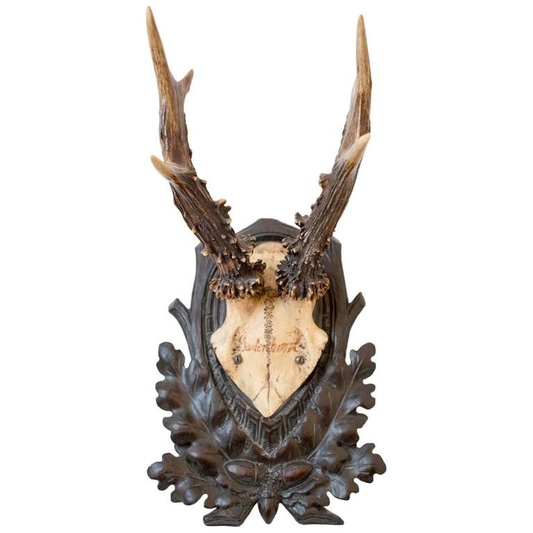 19th Century Habsburg Roe Deer Trophy from Eckartsau Castle, Austria