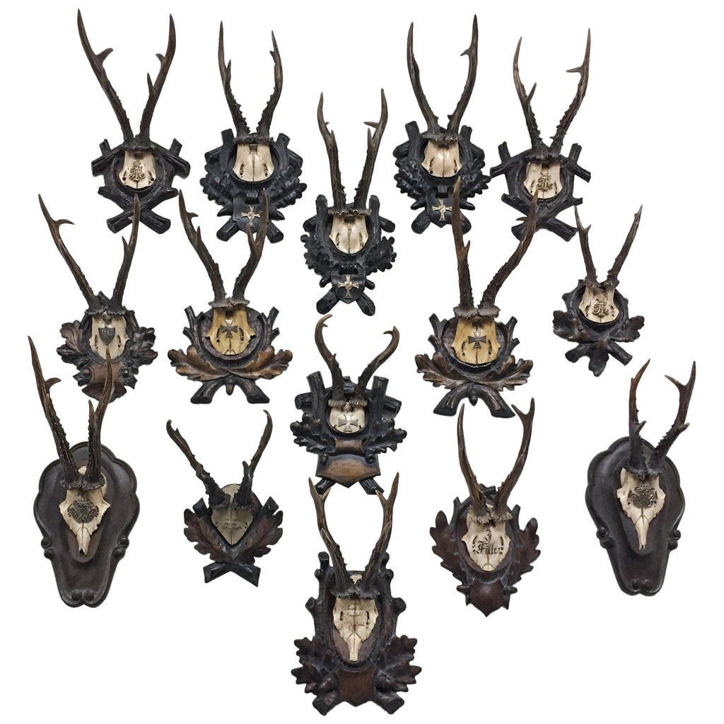 Antique Habsburg Roe Deer Trophies from Eckartsau Castle, Austria