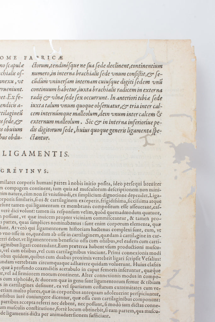 "16th Century Text from ""Anatomes totius"" Medical Text on Acrylic"
