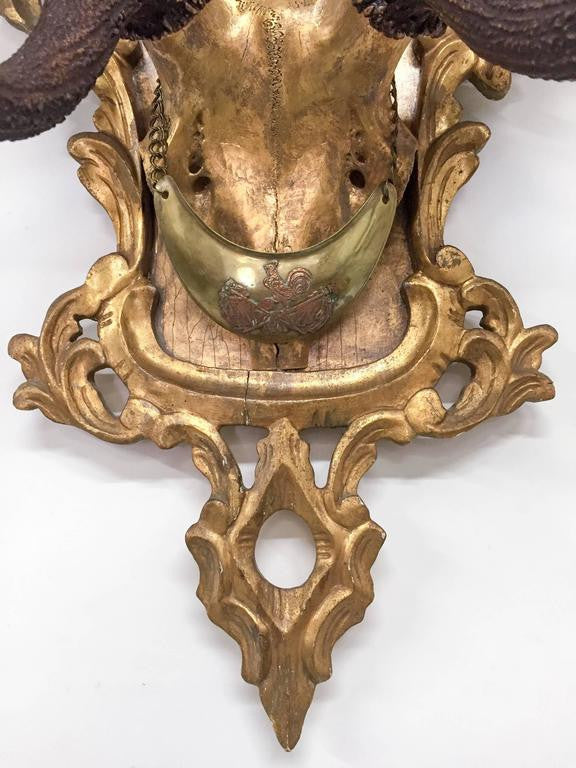 19th C. Habsburg Red Stag Trophy on Hand-Carved Gilt Rococo Plaque with Gilt Cap
