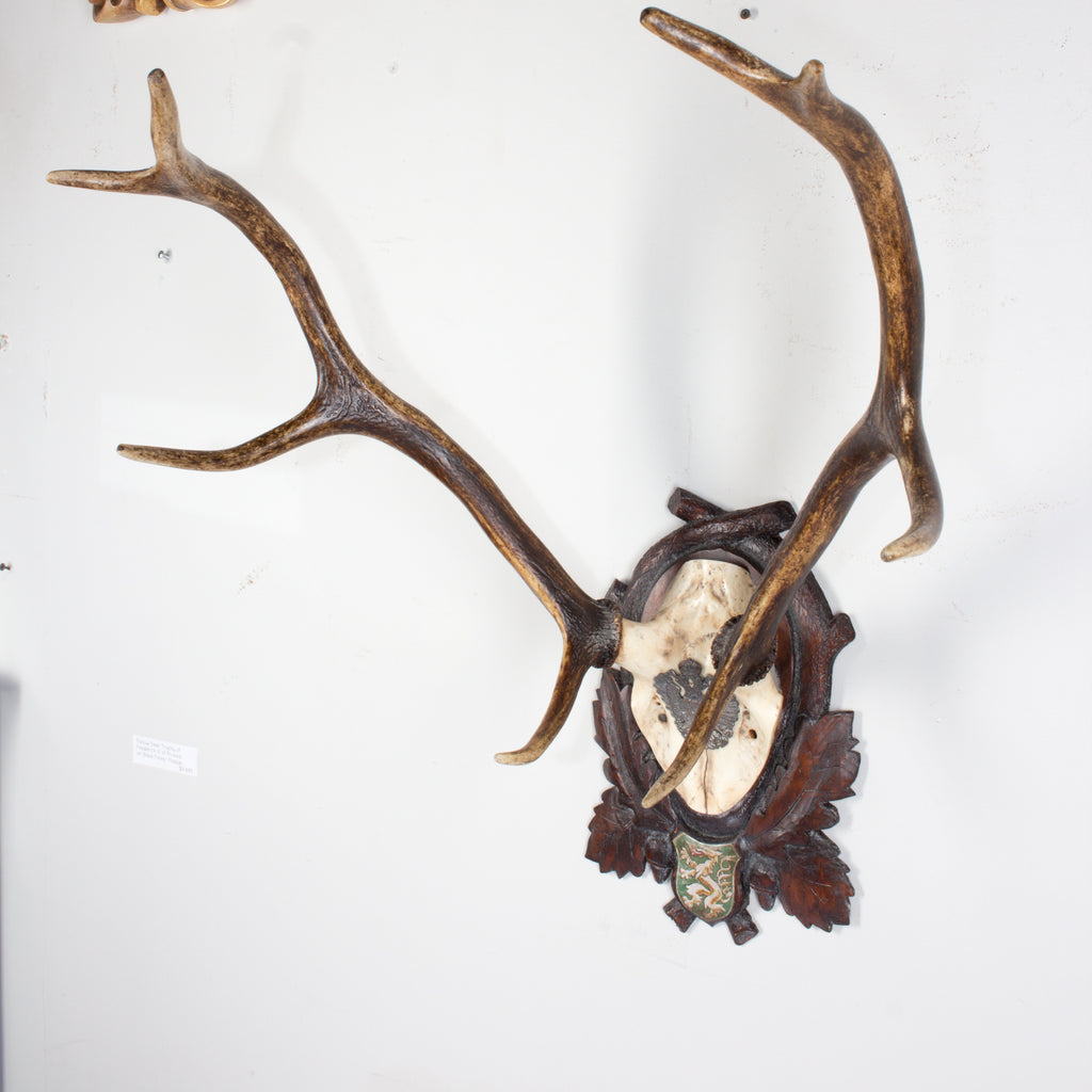 19th Century Habsburg Red Stag Trophy of Emperor Franz Josef from Austria