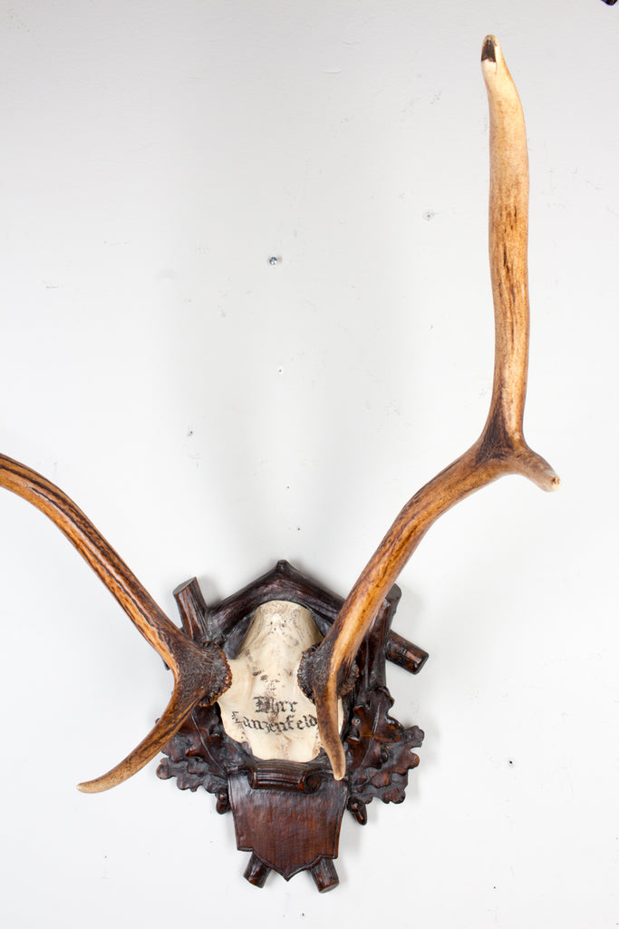 19th c Austrian Red Stag Trophy from Eckartsau Castle, Austria