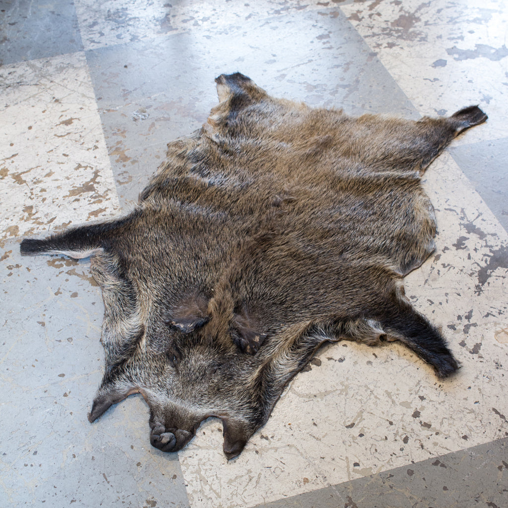 Vintage European Wild Boar Skin Found in France
