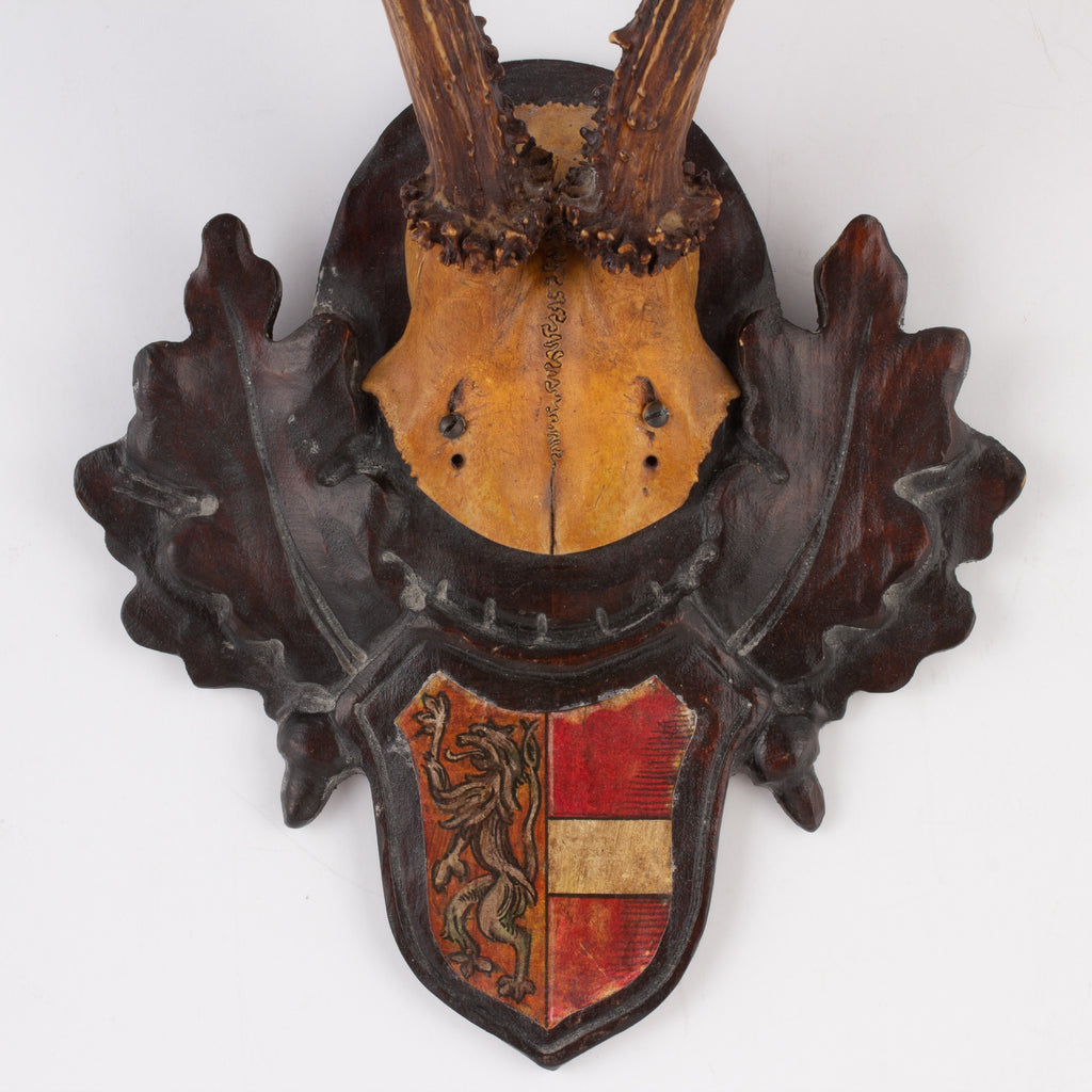 19th Century Austrian Habsburg Black Forest Roe Trophies with Heraldic Badges