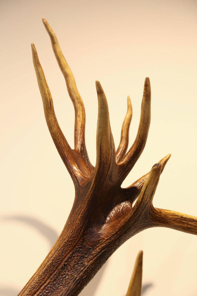 19th Century St. Hubertus Red Stag Hunting Trophy with Fürst Pless Horn #3
