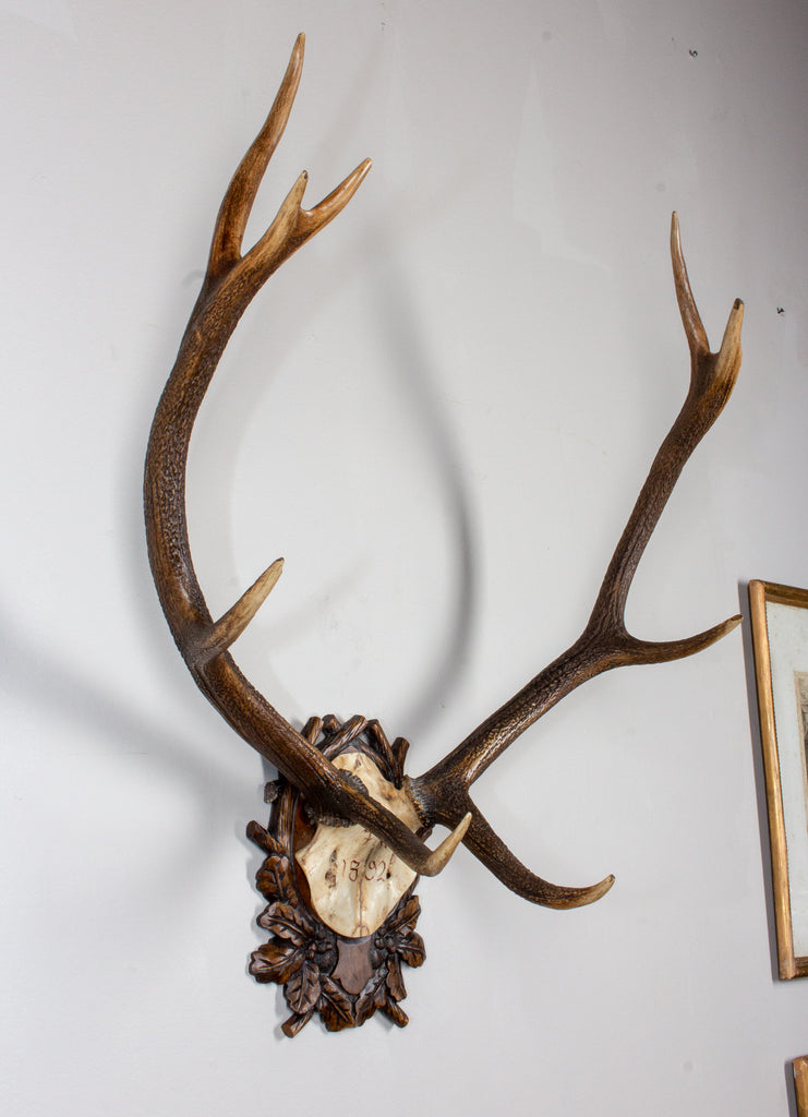Antique Habsburg Red Stag Trophy of Emperor Franz Josef from Eckartsau Castle