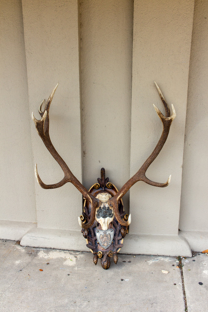 Antique Habsburg Red Stag Trophy on Hand Carved Black Forest Plaque with Gorget