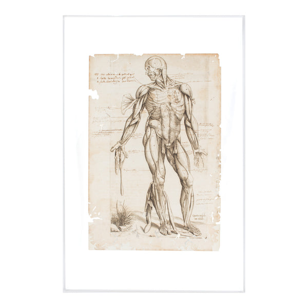 16th Century Andres Vesalius Anatomical Print on Acrylic