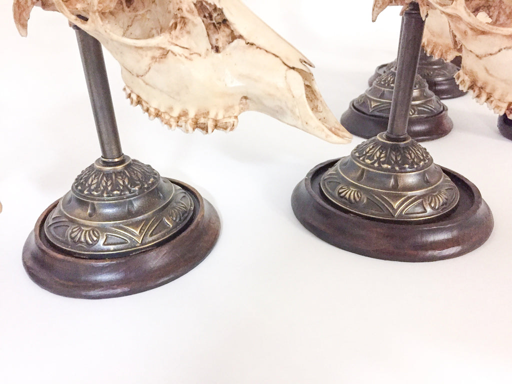 Antique Habsburg Roe Trophies of Emperor Franz Josef on Stands