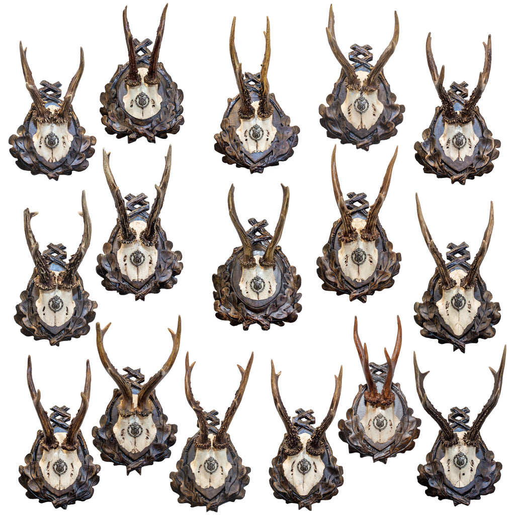 19th Century Habsburg Roe Trophies on Hand Carved Black Forest Plaques