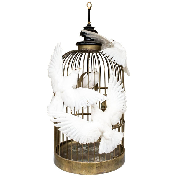 Antique French Birdcage & Taxidermy Dove Sculpture