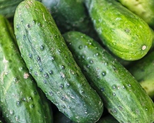 Chicago Pickling Cucumber