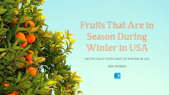 Fruits That Are in Season during Winter in USA / Fruits That Taste Best in Winter in USA