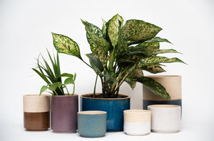 Maceta Alta Mini - Mini Tall Planter