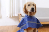Buddy's Never Wet Dog Raincoat XS - XXL