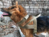 Premium Tactical Dog Collar & Leash