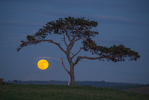 Lonely Tree, Oysterhaven - Cold Moon