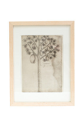 Vintage Papaya Tree Print
