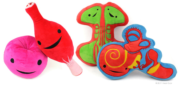 Cervix Muscle Sinus Inner Ear Plush Toys
