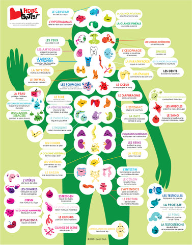 French Language Anatomy Poster Kids Free Download
