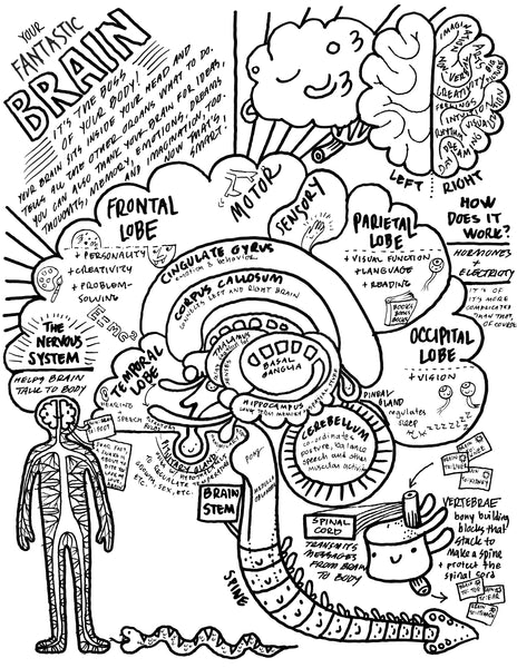 Brain Coloring Sheet - Neuroscience Coloring Page for Kids