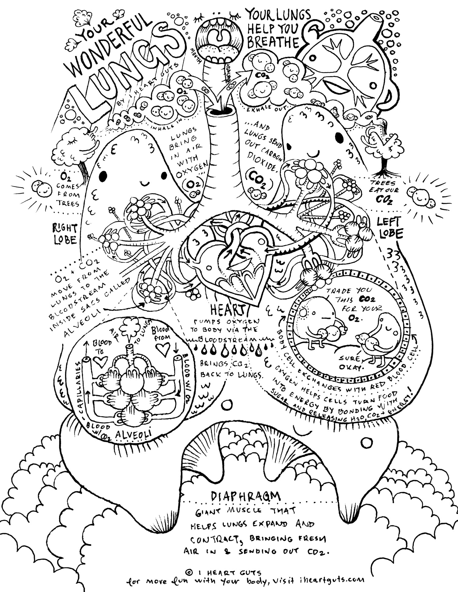 respiratory system coloring page by i heart guts