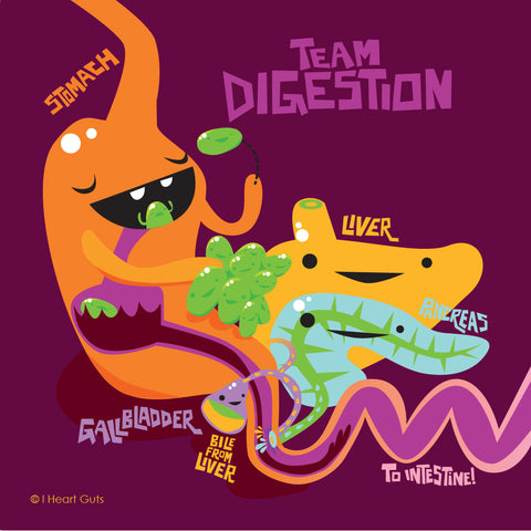 Team Digestion stomach, liver, pancreas, gallbladder and intestine food digestion diagram.