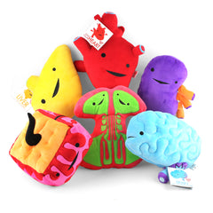Plush Organs Best Funniest Smartest Hospital Gift Surgery Present