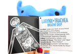 *NEW* - Larynx and Trachea Plush - Sounds Good!
