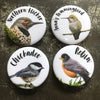 Set of Four Vancouver Birds - Magnet Set
