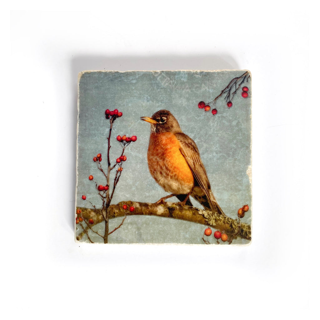 AMERICAN ROBIN - Small Marble Tile Coaster or Wall Art