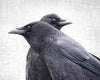 BOTH SIDES NOW- Fine Art Print, Crow Portrait Series
