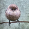 Custom Order for Corinne -  Small But Determined Bushtit Cushion Cover