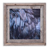 RAVEN FEATHERS - Fine Art Print, Raven Portrait Series
