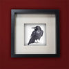 RAVEN LOOKS BACK - Fine Art Print, Raven Portrait Series