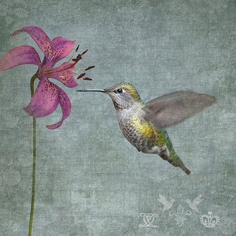 FEMALE ANNA'S HUMMINGBIRD WITH LILY - Fine Art Print, Garden Birds Series