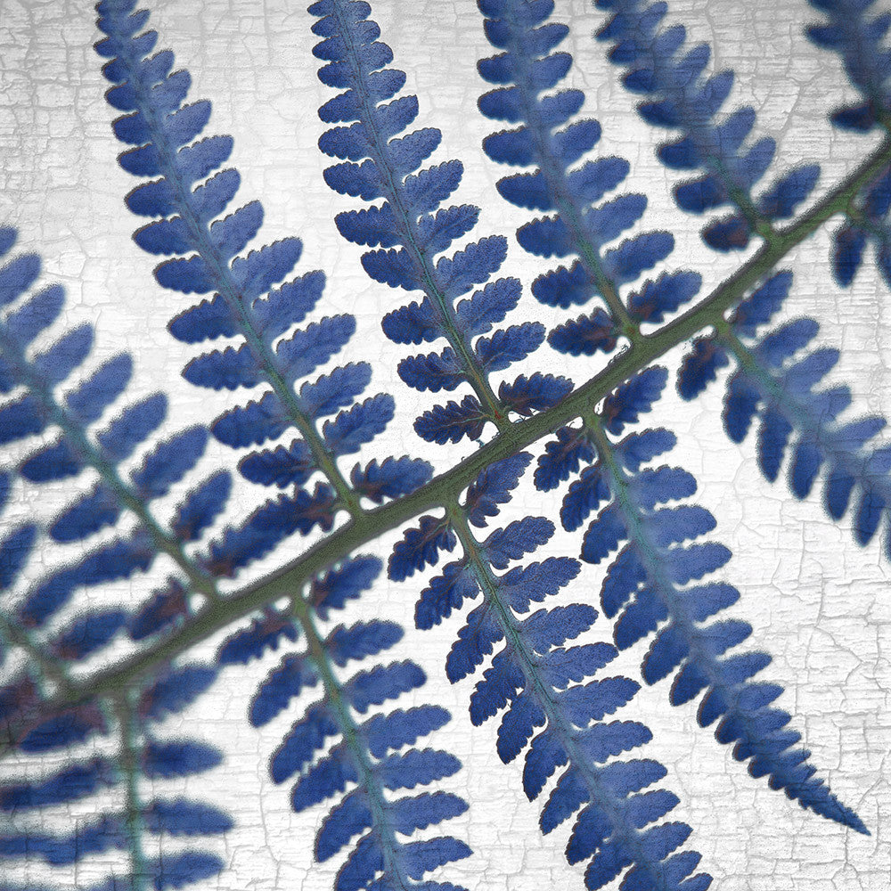 GHOST FERN - Fine Art Print, Botanical Blueprint