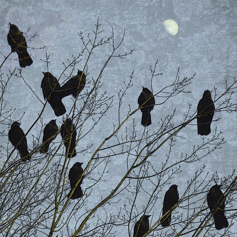 MOONLIT CROWS - Fine Art Print, Blue Crow Series