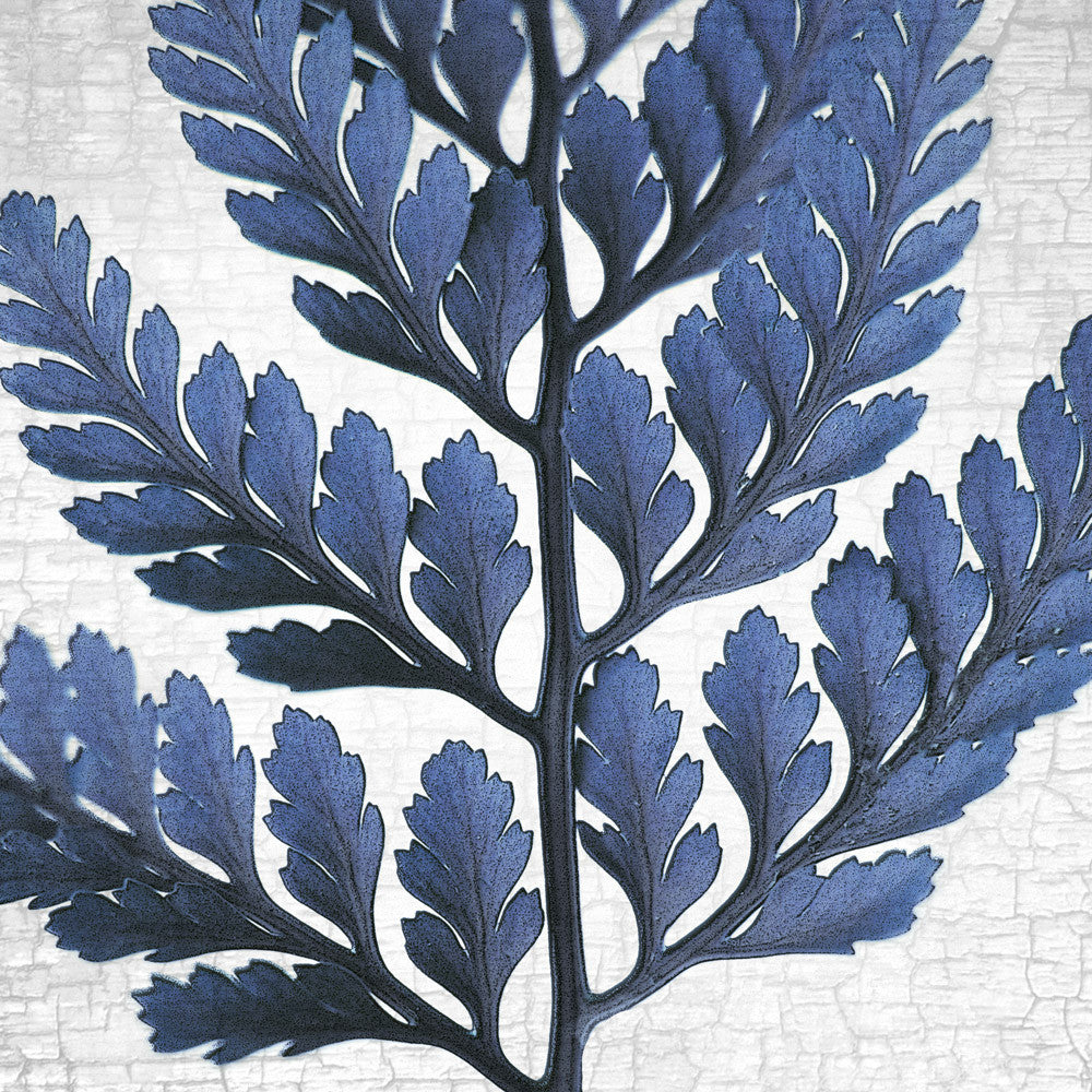 RABBITS FOOT FERN - Fine Art Print, Botanical Blueprint