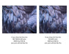 RAVEN FEATHER FINERY - Fine Art Print, Feather Series