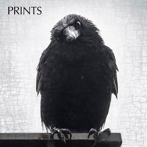 June Hunter City Hairdo Crow cushion cover 25% off