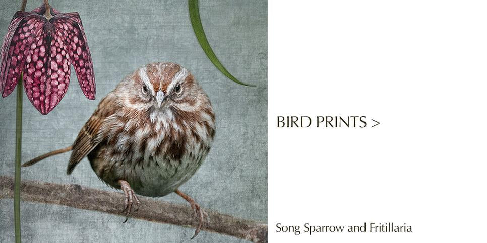Crow Portrait cushion covers by June Hunter