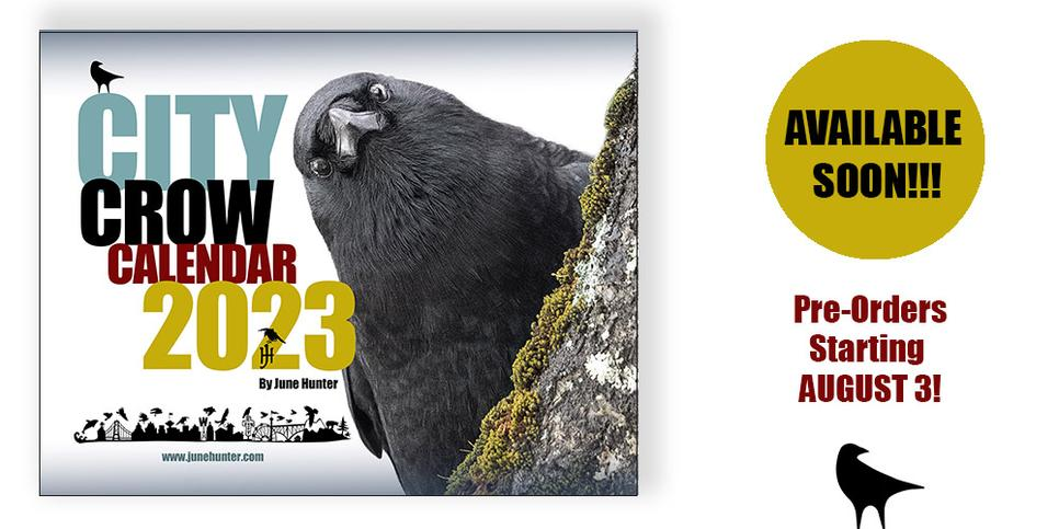 Crow's Knowing Look, a photo portrait by June Hunter available as signed print