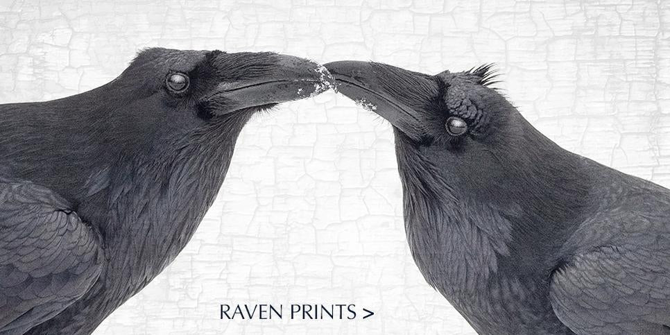 Shop for fine art raven and crow cushion covers
