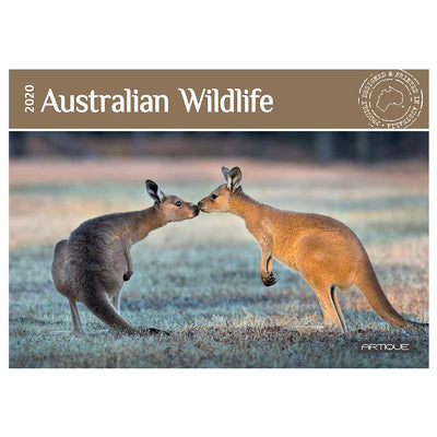 The Best Australian Souvenirs 2020 Calendar Featuring Kangaroos, Koalas &  other Native Animals Made in Australia