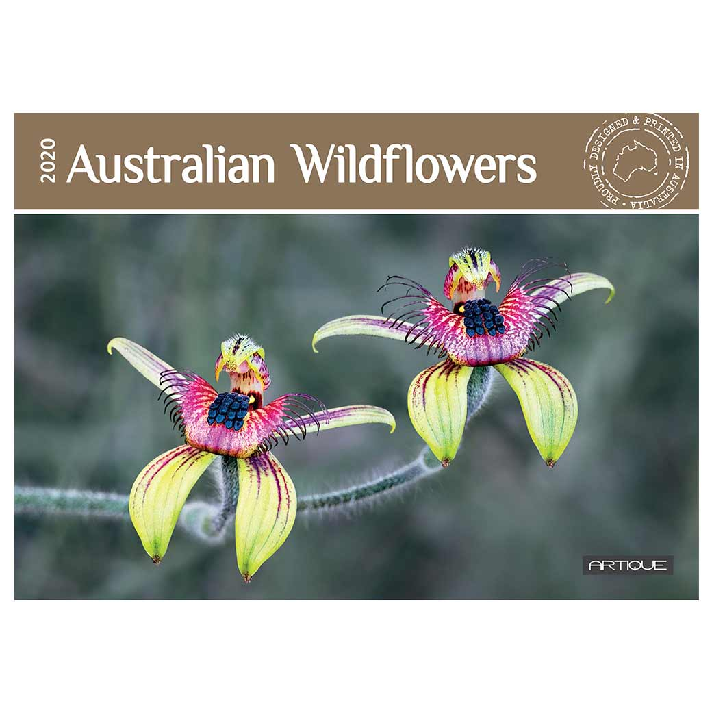 2020 Australian Wildflowers Souvenir Calendar for Unique Gifts Buy Online or Sydney Gift Store