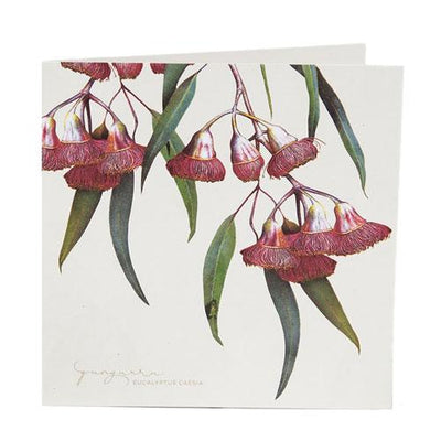 Bush Gems Boxed Cards