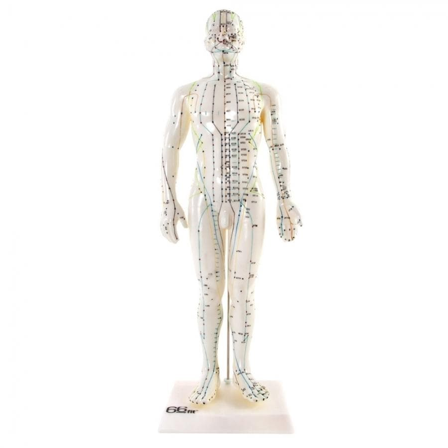 66FIT ACUPUNCTURE MALE MODEL - 50CM